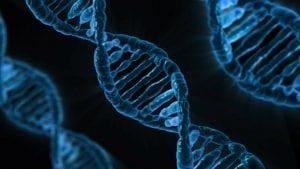 immigration DNA testing